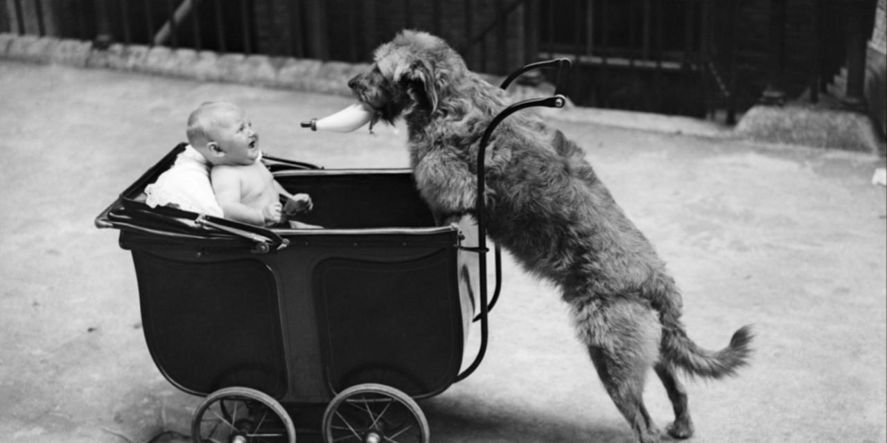 Bébé arrive ! préparez votre amour de chien !